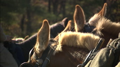 Close up of horses Stock Footage