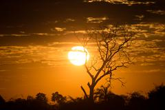 African Golden Sunset with Tree - stock photo