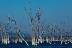 Lake kariba Dead Forrest - stock photo