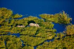Elephant and Calf in Water from the Air - stock photo