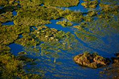 Okavango Delta Red Lechwe From the Air Stock Photos