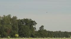 Cow parsnip field Stock Footage