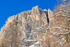 bare tree and rock in dolomites mountain - stock photo