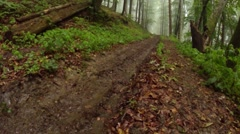 Salamander crawling on the dirt forest mud road Stock Footage