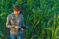Agronomist with tablet computer in corn field Stock Photos