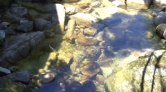 Clear River Stream Stock Footage