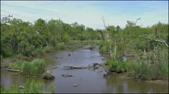 Louisiana swamp water 4k Stock Footage