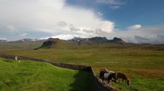Horses near old graveyard under scenic snaefellsjokul glacier, Iceland Stock Footage
