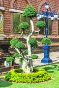 green bonsai tree - stock photo