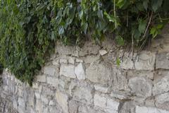 Stone Wall Climbing Vines Of Ivy Stock Photos