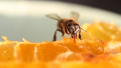 Bee gathering honey - stock footage