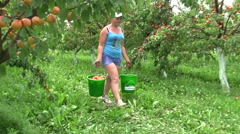 girl with the apricot harvest - stock footage