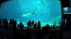 Georgia Aquarium - stock footage