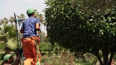 Garderner cutting a tree in a luscious garden - Marrakech Stock Footage