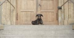 Dog lying in front of a wooden door, crane shot, slow motion Stock Footage