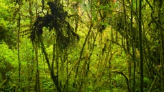 Thickets of tropical rainforest Stock Footage