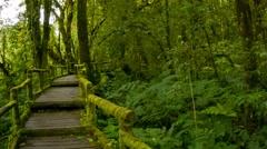 tourist track through the rainforest. thailand, pov - stock footage