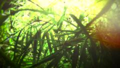 Vivid Bamboo Background Stock Footage