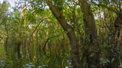 The flooded forest. cambodia Stock Footage