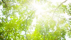 Blinding sun through tree leaves Stock Footage