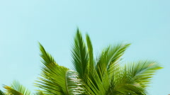 Crest of palm tree quiver in the wind against the sky Stock Footage