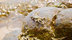 Crabs feed on the stones in the surf. thailand, phuket island Stock Footage
