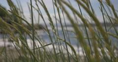 4k, norway, seaview through weed Stock Footage