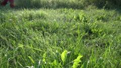 Farm worker walking on dewy summer morning grass Stock Footage