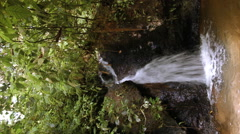 Rainforest waterfall Stock Footage