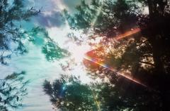 light spectrum through pine trees - stock photo