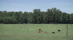 Cows on Farm 1 Stock Footage