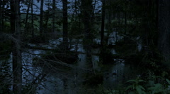 Stock Video Footage of Swamp in the forest at night.