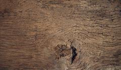 Beautiful close up textured of bark wood use as multipurpose natural backgrou Stock Photos