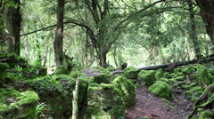 Puzzlewood forest of dean Stock Footage