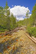 Alpine creek on a summer day Stock Photos
