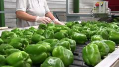 Green peppers  travel along a conveyor belt Stock Footage