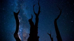 Time Lapse Milky Way and trees - stock footage