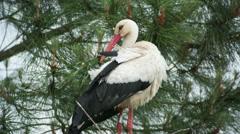 Storks birds nesting park water Stock Footage