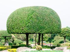 wood shrubs - stock photo