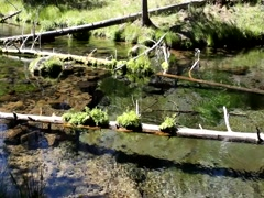 Clear Oregon spring water Stock Footage