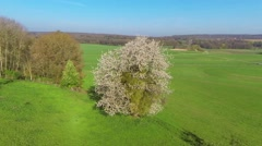Stock Video Footage of flying around a blooming tree in spring