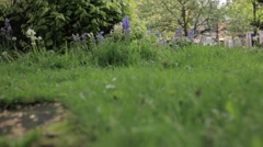 Urban Park in England (Close up) Stock Footage