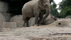 Elephant at the zoo Stock Footage