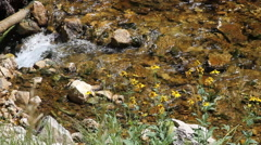 Flowers line a bubbling brook Stock Footage
