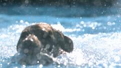 Dog Getting Toy in Water in Super Slow Motion Stock Footage