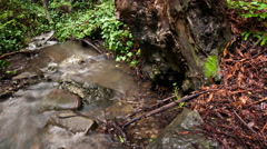 Redwood Creek Forest Timelapse Stock Footage