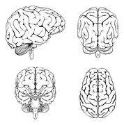 brain from top side front and back - stock illustration