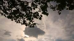 dramatic clouds filmed from under the tree - stock footage