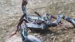 Dangerous scorpion close up view. HD video footage - stock footage