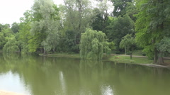 Clear lake water, amazing park with green tall trees, willows falling in water Stock Footage